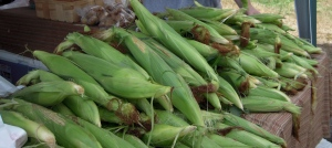 Corn at Farmer's Market